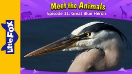 Meet the Animals 11 - Great Blue Heron - Animated Stories by Little Fox