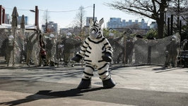 Zebra Runs Loose in Japan--Was it a False Flag?