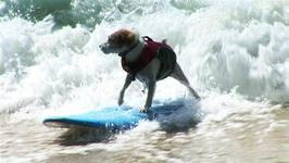 How To Select A Surfboard For Your Dog