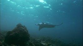 Australia: Great Barrier Reef