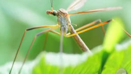 Do Your Part: Get Rid of Mosquitos Naturally