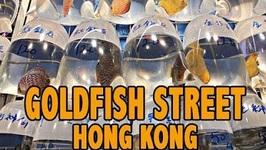 Goldfish Street - Mongkok Street - Hong Kong