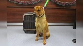 Dog Abandoned at Scottish Train Station with Belongings in a Suitcase