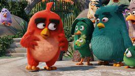 Movie Report 'The Angry Birds Movie'