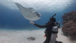 OMG - Great Barrier Reef, Queensland Australia