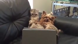 Cat And Dog Have A Lazy Sunday