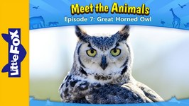 Meet the Animals 7 - Great Horned Owl - Animated Stories by Little Fox