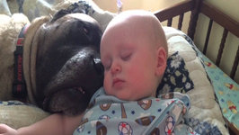 Dog And Baby Take A Snooze - Monday Moodboost