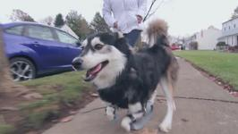 Dog Runs for the First time Thanks to 3D Printed Legs