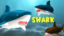 Finger Family Shark Family Nursery Rhyme 3D  Animal Finger Family  Fish Finger Family For Kids