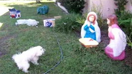 Dog Doesn't Like Nativity Scene