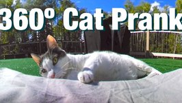 360 Degree Cat Prank - Hidden Kittens