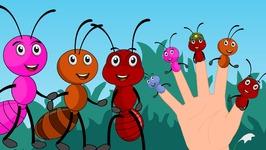Ant Finger Family Ants Go Marching Finger Family Nursery Rhyme  Animal Finger Family