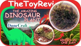 The Amazing Dinosaur Plant By DuneCraft Unboxing Toy Review