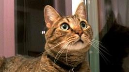 Cats Explore NEW HOME in Alaska