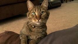 Mean Kitty - Kitty Chiropractor