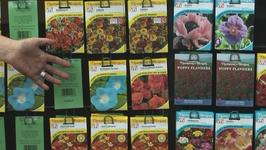 How To Purchase Seeds