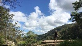 Kondalilla NP - Blackall Range - Sunshine Coast Hinterland - QLD
