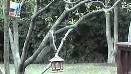 Slippery Squirrel- PetTube