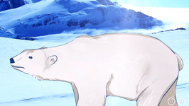 Polar Bears Are Black Or White?