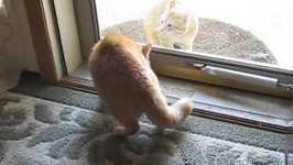House cats guard their home from stray cat
