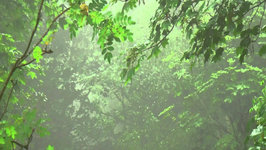 Guided Sleep Talk Down to Rain Sounds - Deepest Relaxation to Nature Sounds
