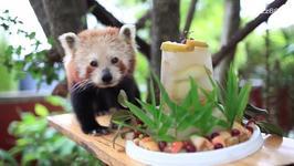 Red Panda Celebrates Sweet 16 With Custom Cake
