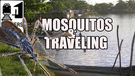 Mosquitos in Brazil - How to Avoid Mosquito Bites While Traveling