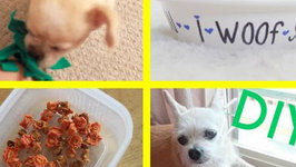 DIY Dog Treats and Affordable Gift Ideas