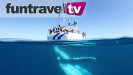This Is Why Hervey Bay Is Australia's Best Place To Go Whale Watching
