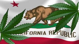 California to Vote on Legalizing Weed