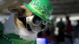 How To Get Your Dog In Style For Any Holiday
