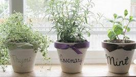 Seasonings at your disposal - Kitchen Herb planter