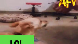 Dog Wearing Boxing Gloves Loves to Box