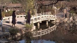 Maruyama Park, Kyoto, Japan Travel Video