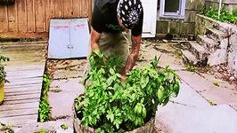 Garden Progress  Herbs Basil Sage Parsley