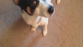 Cutest Doggy Denial - Tail Tuesdays