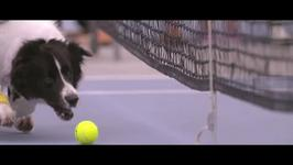 Dogs as Tennis Ball Boys Is An Idea We Took Way Too Long To Come Up With