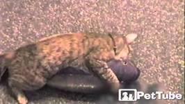 Cat Catches GIANT Fish - PetTube