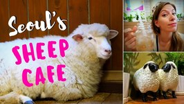 Sheep Cafe in Seoul, Korea - Visiting Thanks Nature Cafe in Hongdae