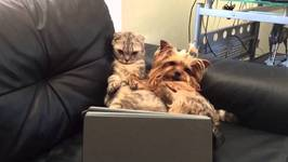 Cat and Dog Can't Take Their Eyes Off TV