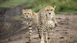 African Wildlife Safari - Serengeti National Park, Tanzania