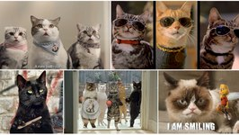 Top 15 Most Funniest Cats Awesome Commercials Ever