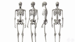 How Many Bones Do Children Have And Adults Have?