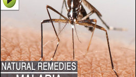 Malaria - Natural Ayurvedic Home Remedies