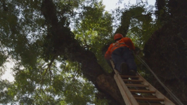 Sao Paulo: Fallling Trees Pose Threat to Residents