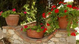 How To Style A Mediterranean Look In Your Garden