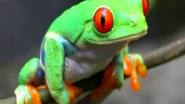 German Tourist Caught Smuggling 170 Animals Out of Costa Rica