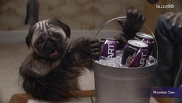 Mountain Dew's Puppy Monkey Baby Is Freaking Super Bowl Viewers Out