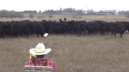 Trombone-Playing Farmer Serenades Cows with 'Jingle Bells'